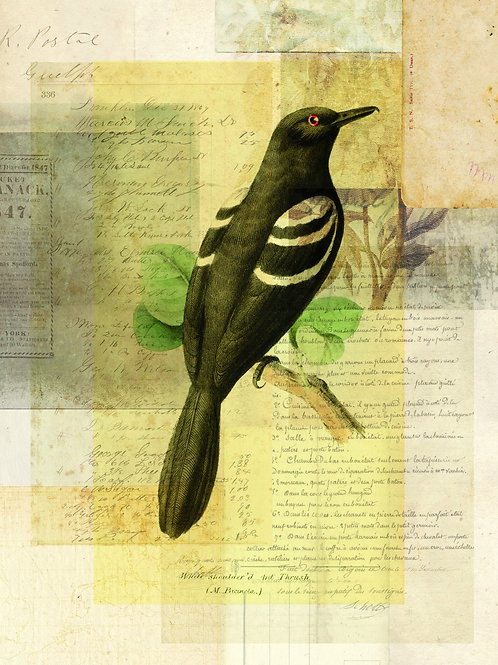 Bird Collage Print-No. 124