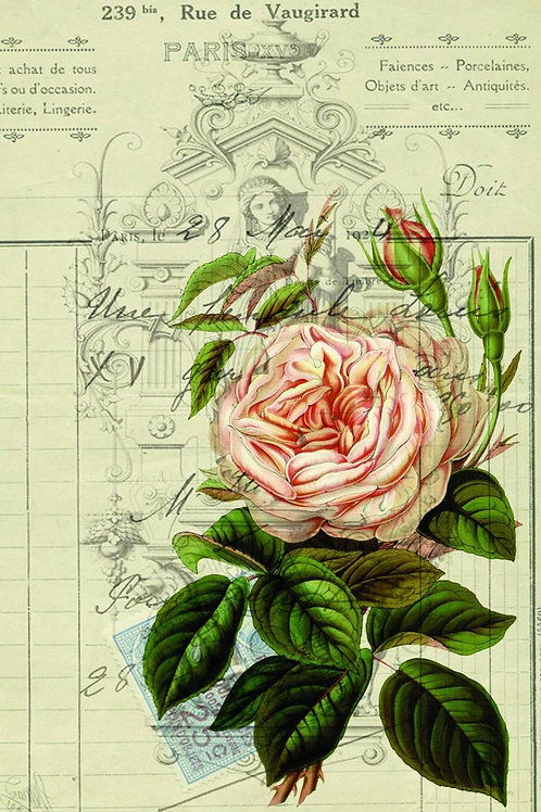 French Botanical Print 02-Blank Note Card