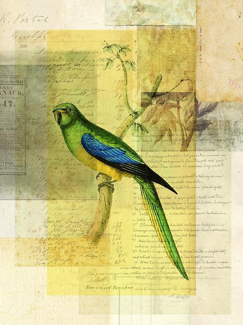 Bird Collage Print No. 121