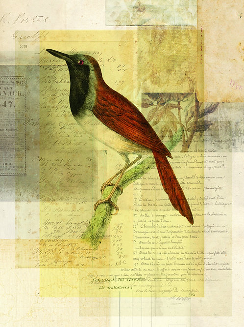 Bird Collage Print-No. 123