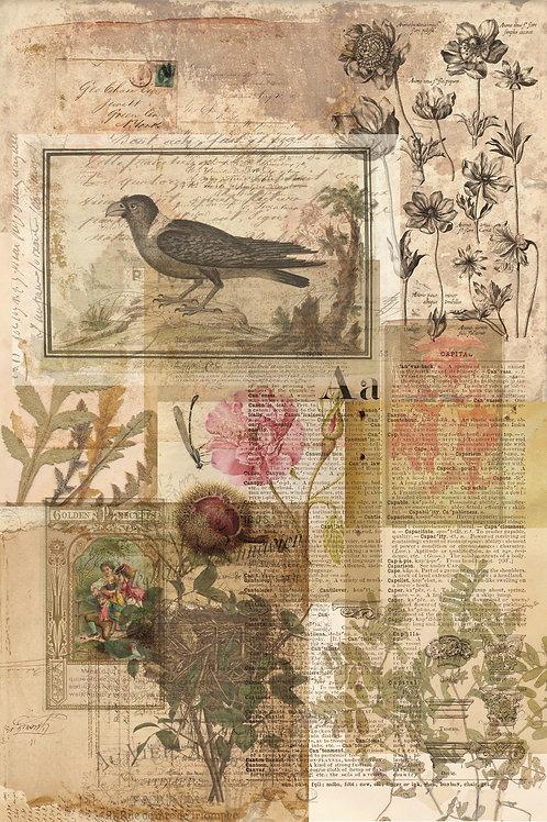 Bird Collage Print-No.0121