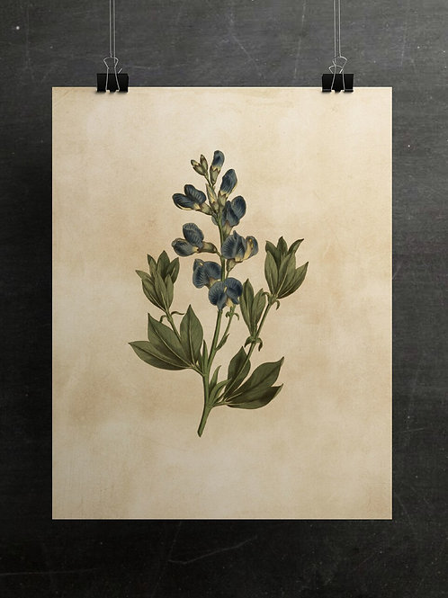Botanical Print-No. 008