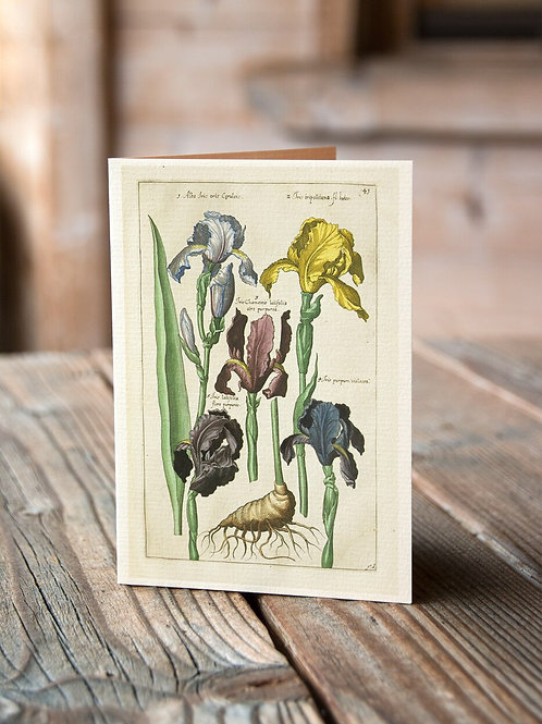 Antique Botanical Collage Print-No.037-Blank Note Card