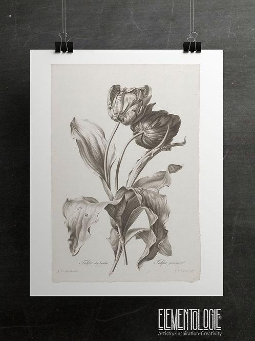 Botanical Printable print No 045