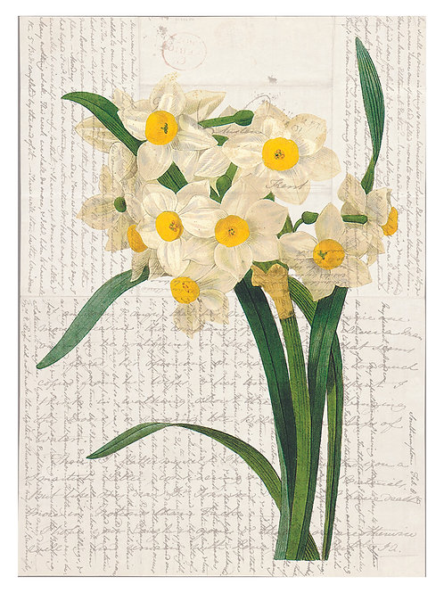 Botanical Print 55923-Blank Note Card