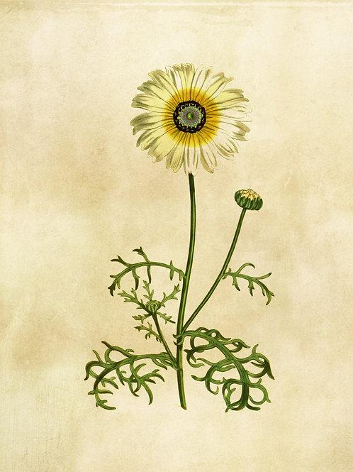 Botanical Printable print No 007