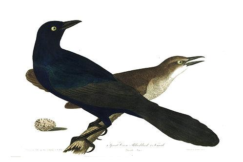Bird Print-Number 17