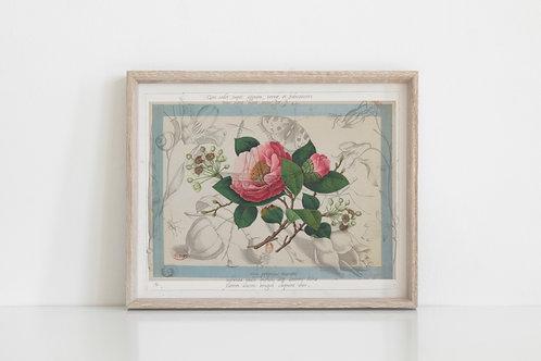 Botanical Printable print No 077