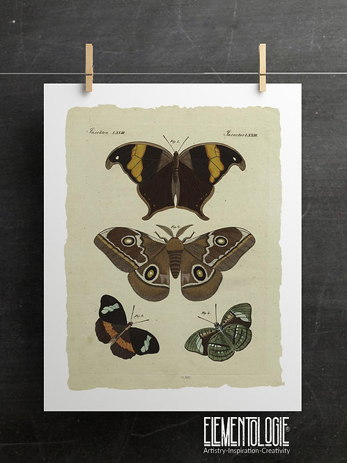 Butterfly Printable No 902