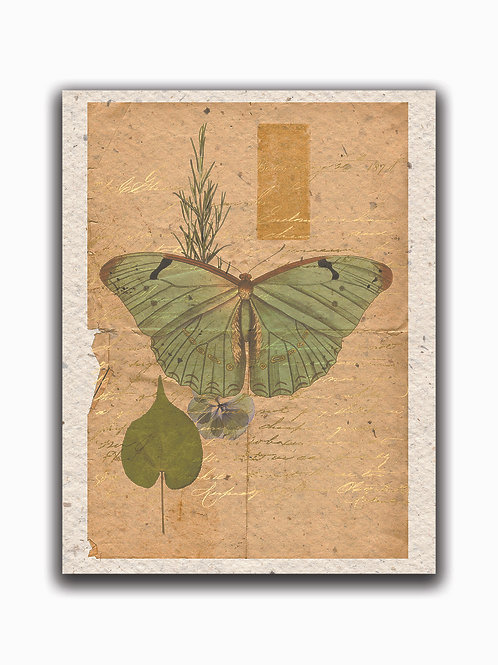 Botanical Butterfly Collage 55917-Blank Note Card