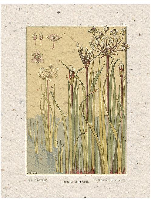 Botanical Print No.55194