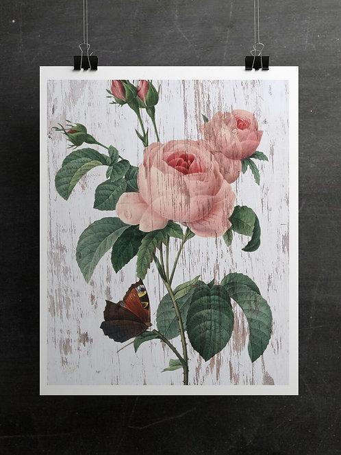 Botanical Print-No. 022