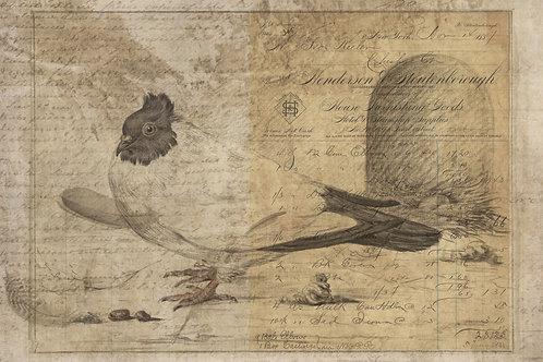 Bird Print No. 33360