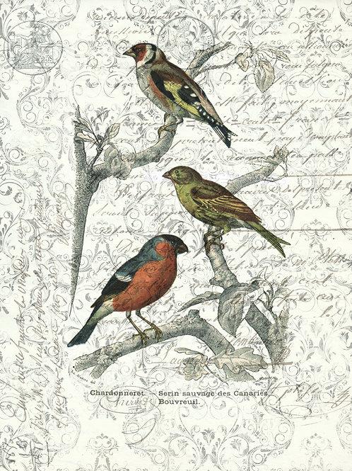 Bird Print No. 1055