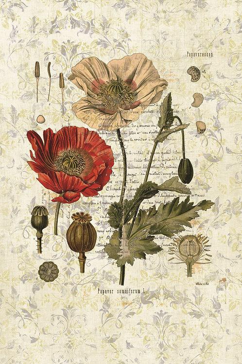 French Botanical Print No. 09