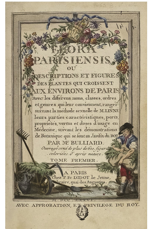 French Botanical Print No. 13