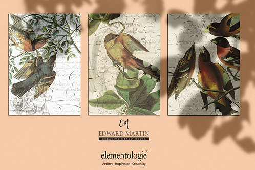 Bird Collage Print SET OF 3 No. 1190 - Sizes: 4x6, 5x7, 8.5x11, 16x20, 18x24