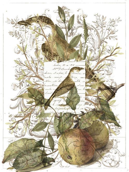 Bird Print No. 33364