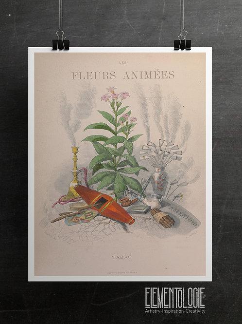 Botanical Printable print No 051