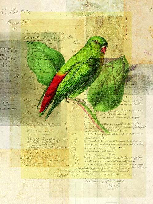 Bird Collage Print-No. 119