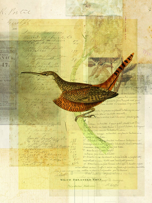 Bird Collage Print-No. 114
