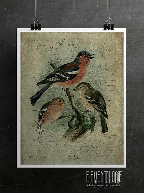 Bird Collage Print-No.33358