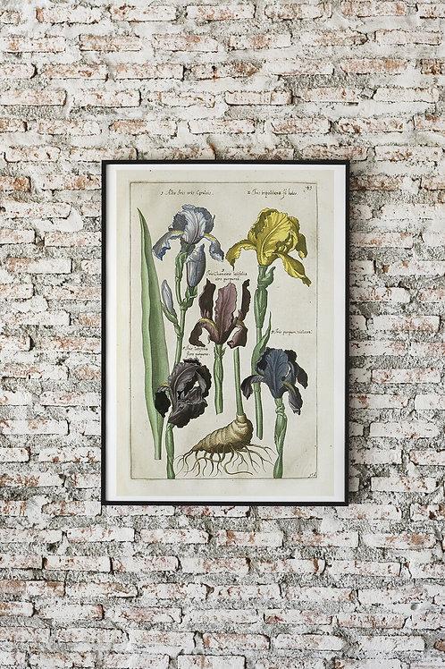 Antique Botanical Collage Print-No.037