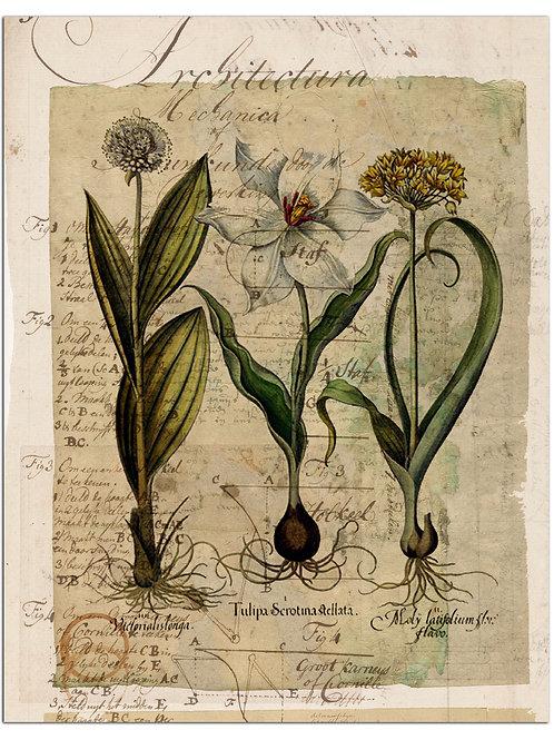 Botanical Background Page Sheet- No 423019-Digital Download