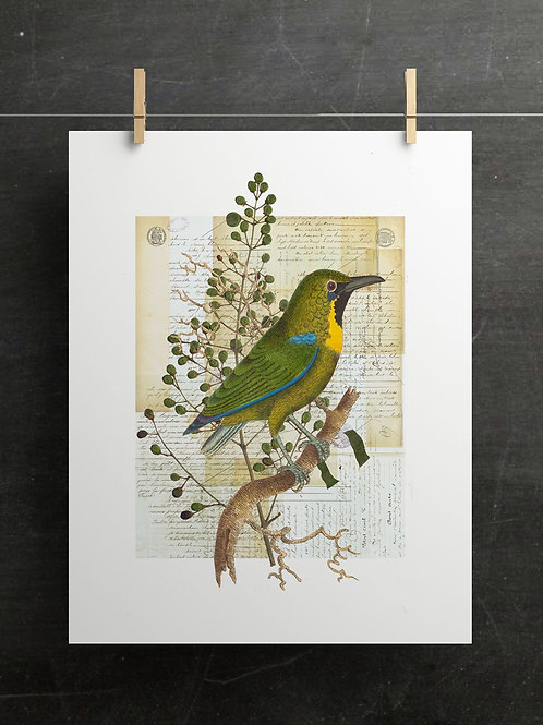 Bird Collage Print-No. 01003