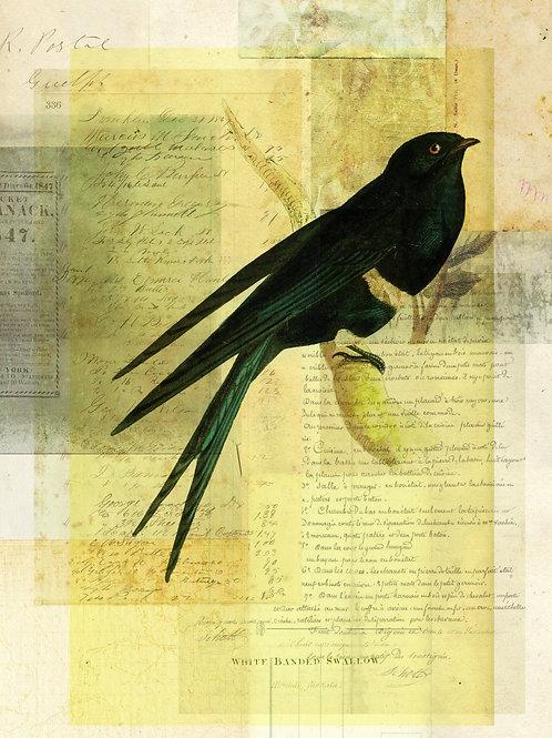 Bird Collage Print-No. 109