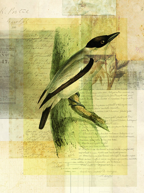 Bird Collage Print No. 112