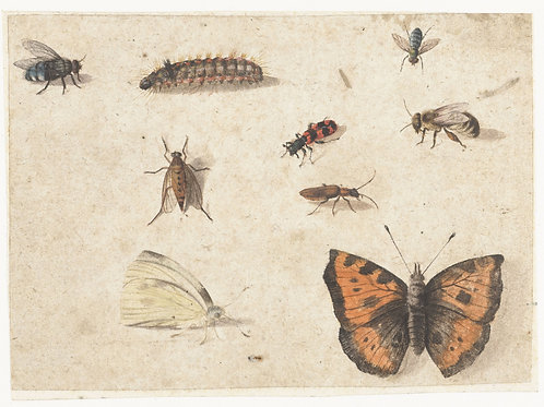 Insect Print No. 1953