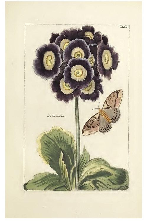 Botanical Print-No. 1006