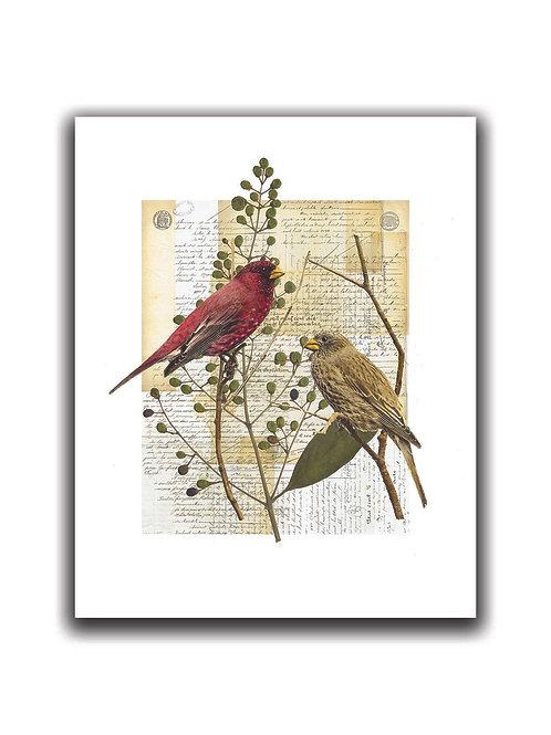Bird Collage Print No. 01001-Blank Note Card