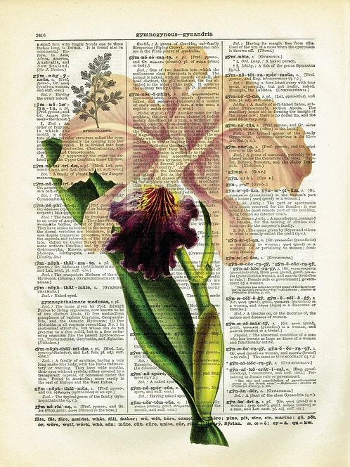Orchid-Vintage Book Page Art Print No.05