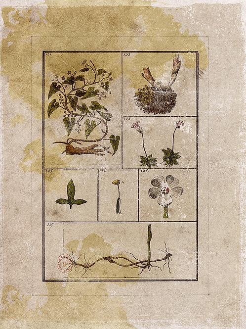 Botanical Background Page Sheet- No 405-Digital Download