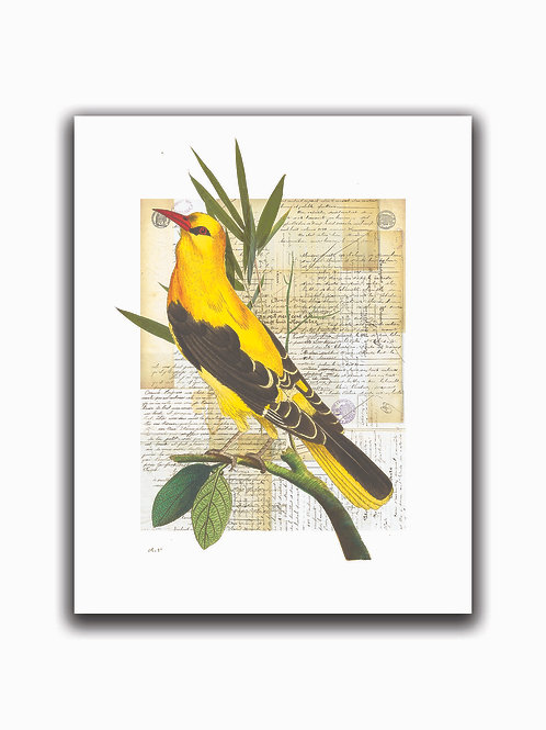 Bird Collage Print No. 01000-Blank Note Card