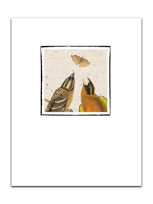 Bird  No. 8881-Blank Note Card