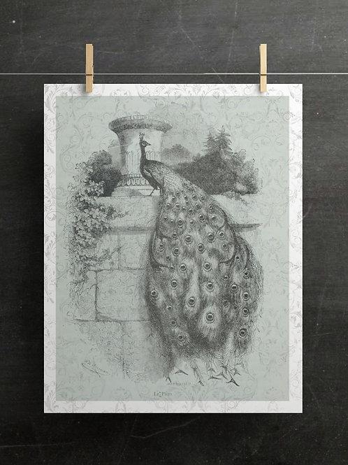 Antique Peacock Printable-No.100