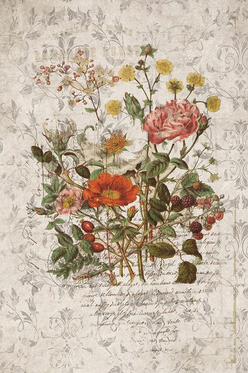 French Botanical Print No. 17