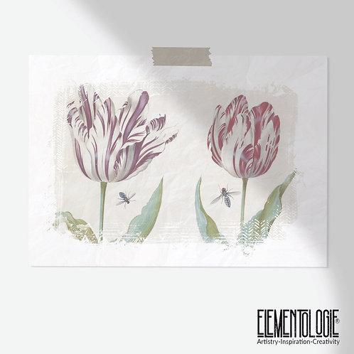 Botanical Print-Tulips-No.004