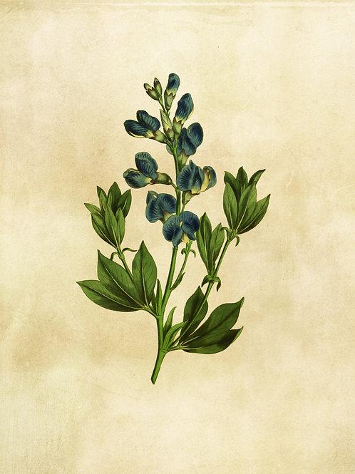 Botanical Printable print No 008