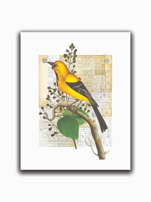 Bird Collage Print No. 01002-Blank Note Card