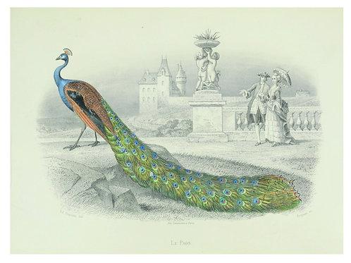 Bird Print No. 92