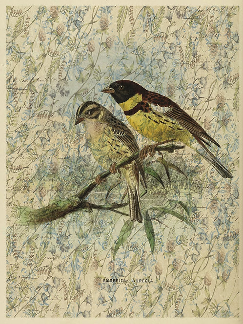 Bird Print No. 33359