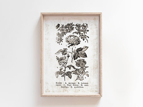 French Dictionary Plate Print-No.22140-Roses