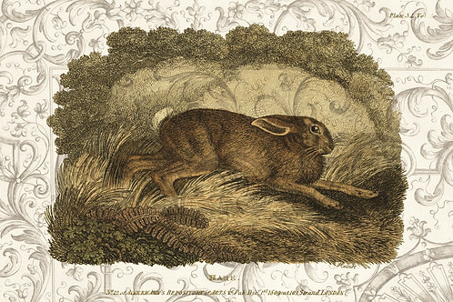 Vintage Hare Printable No. 66345