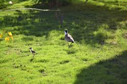 oiseau en famille