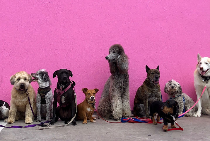 Pink%20Wall%20Full%20of%20Dogs_edited.jpg