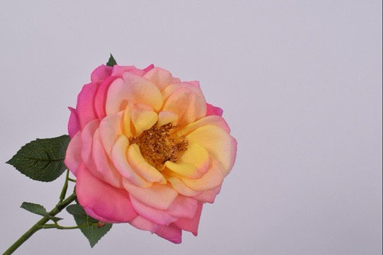 Roos Steel Roze Geel